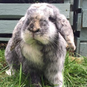 Rabbit Archives - Milton Keynes Veterinary Group